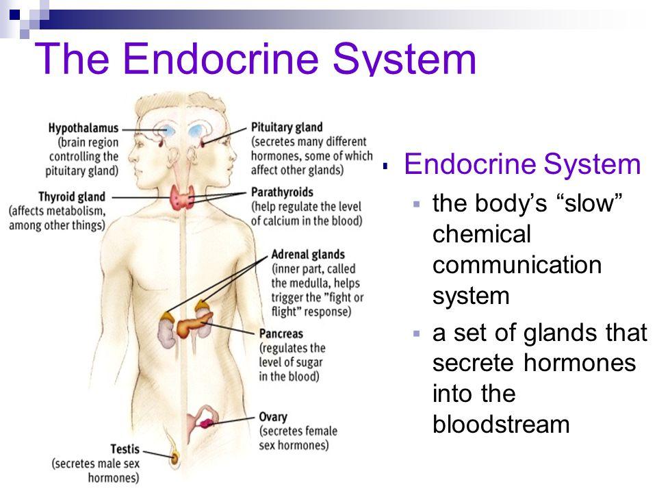 The Endocrine System Endocrine System