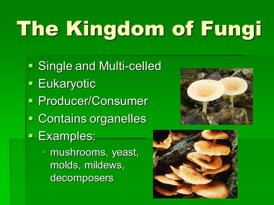 The Kingdom of Fungi Single and Multi-celled Eukaryotic
