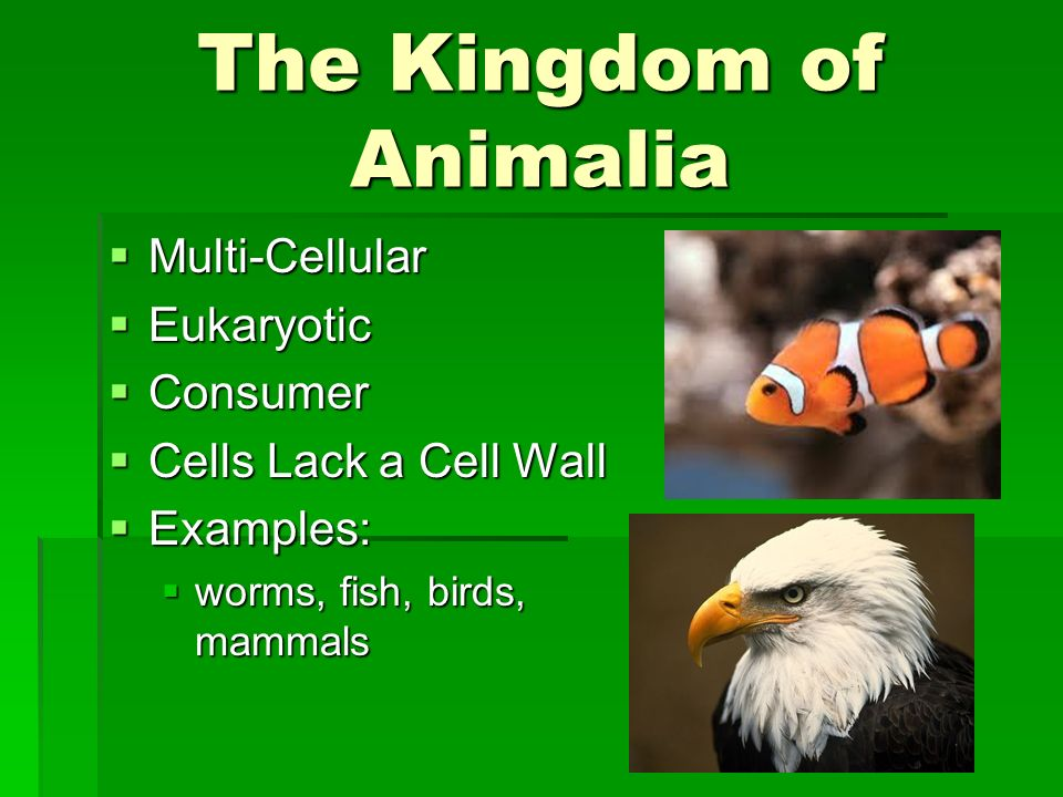 The Kingdom of Animalia