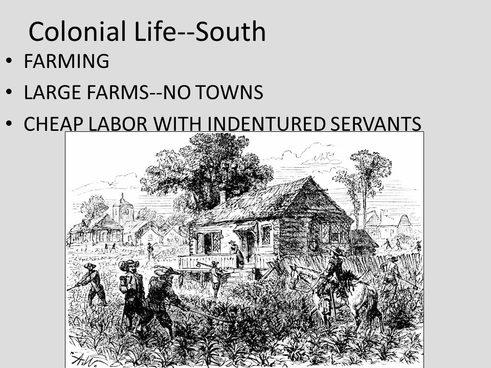 Colonial Life--South FARMING LARGE FARMS--NO TOWNS