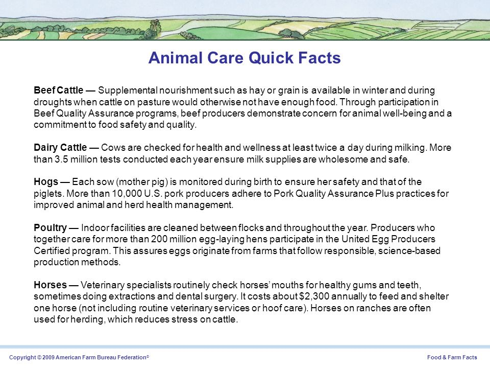 Animal Care Quick Facts