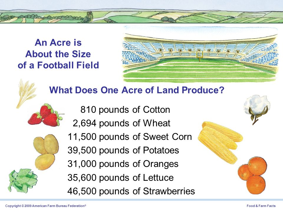 What Does One Acre of Land Produce
