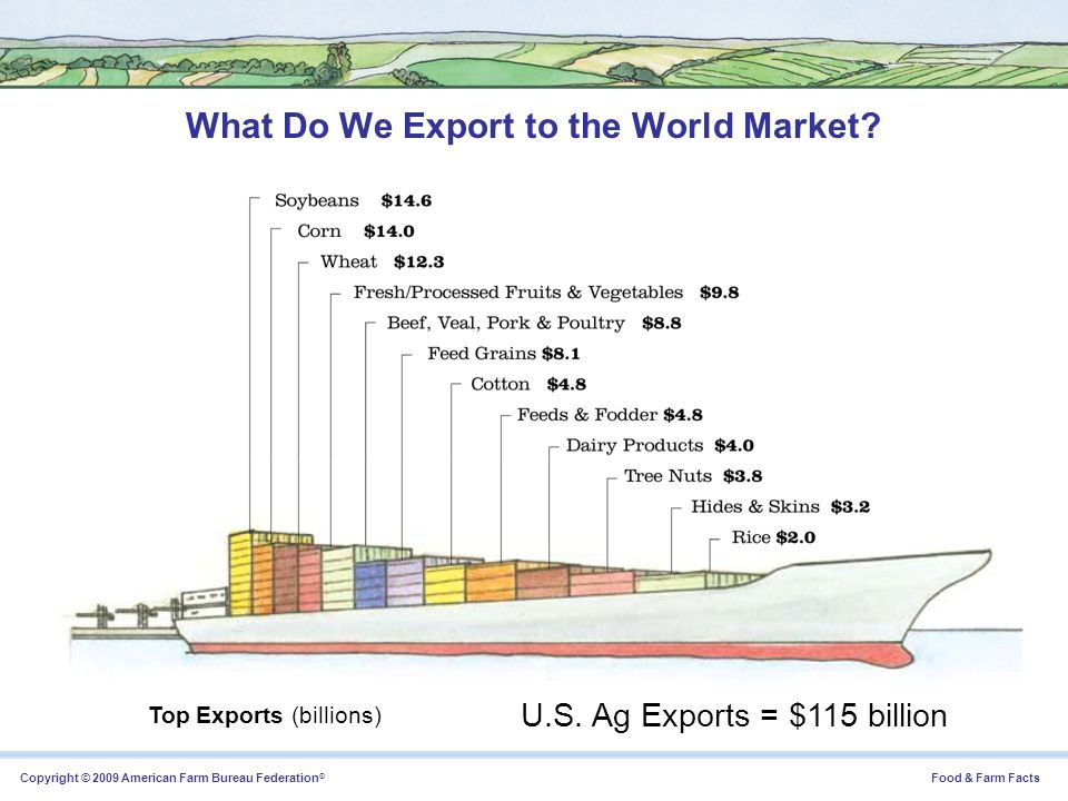What Do We Export to the World Market