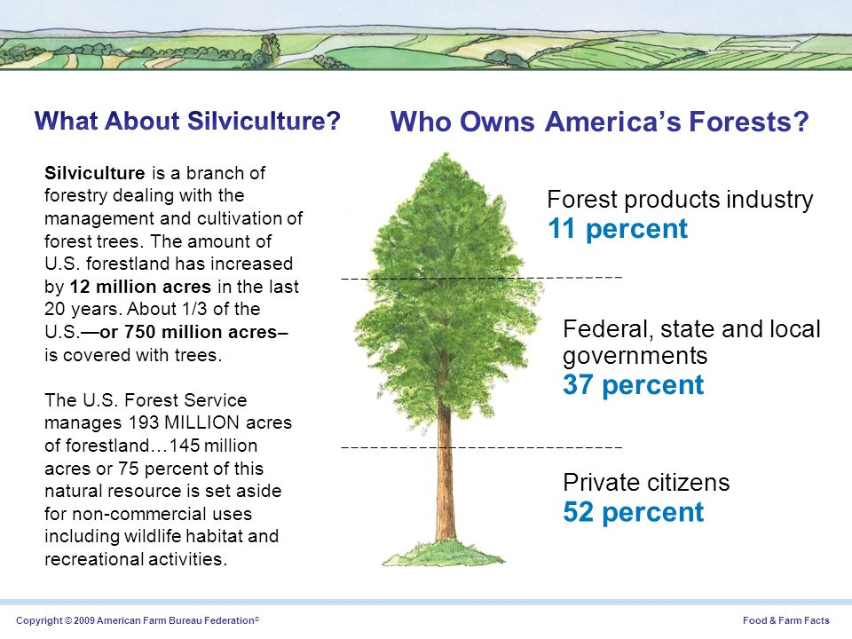Who Owns America's Forests
