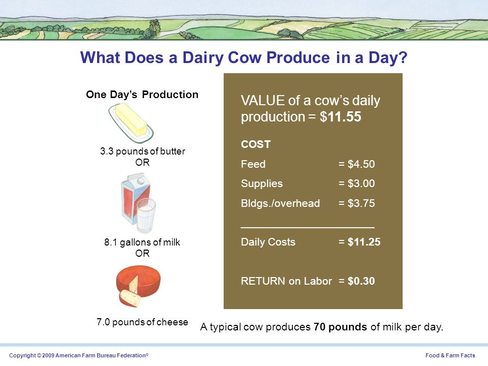 What Does a Dairy Cow Produce in a Day