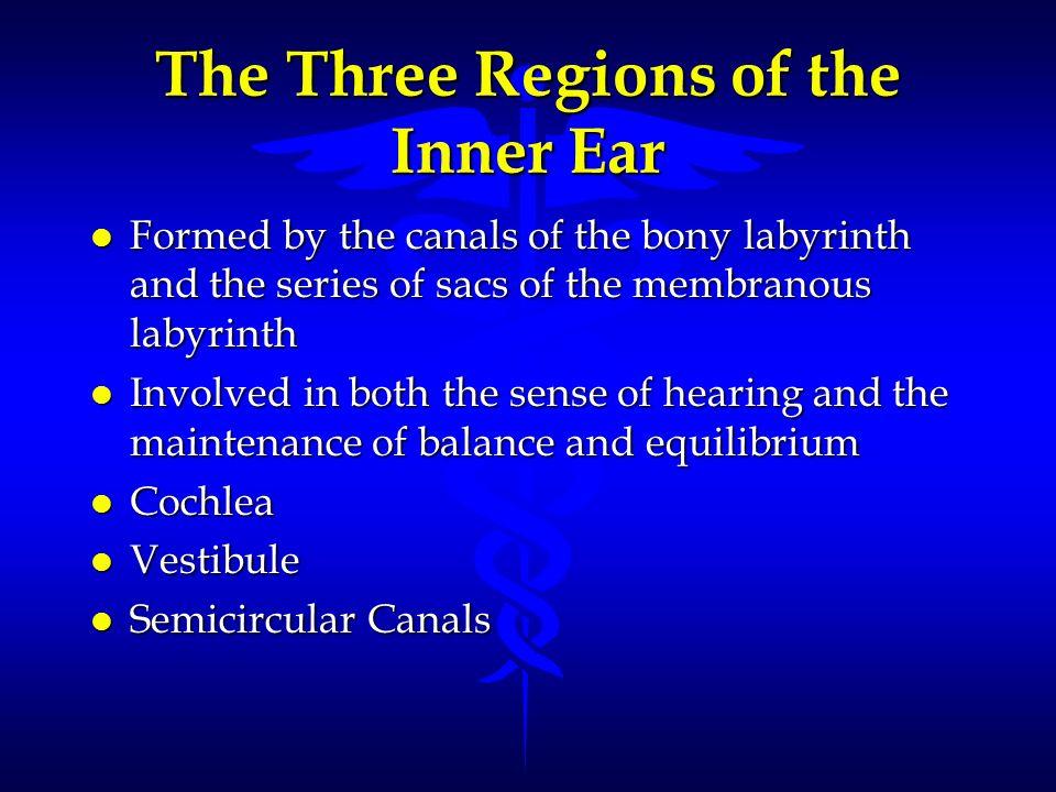 The Three Regions of the Inner Ear