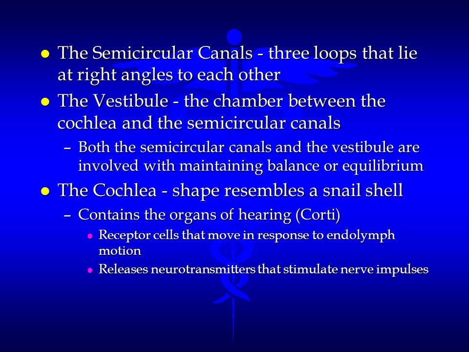 The Cochlea - shape resembles a snail shell