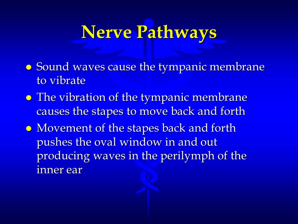 Nerve Pathways Sound waves cause the tympanic membrane to vibrate