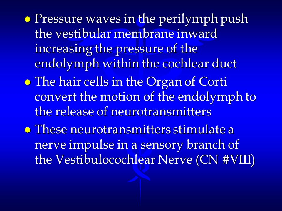 Pressure waves in the perilymph push the vestibular membrane inward increasing the pressure of the endolymph within the cochlear duct