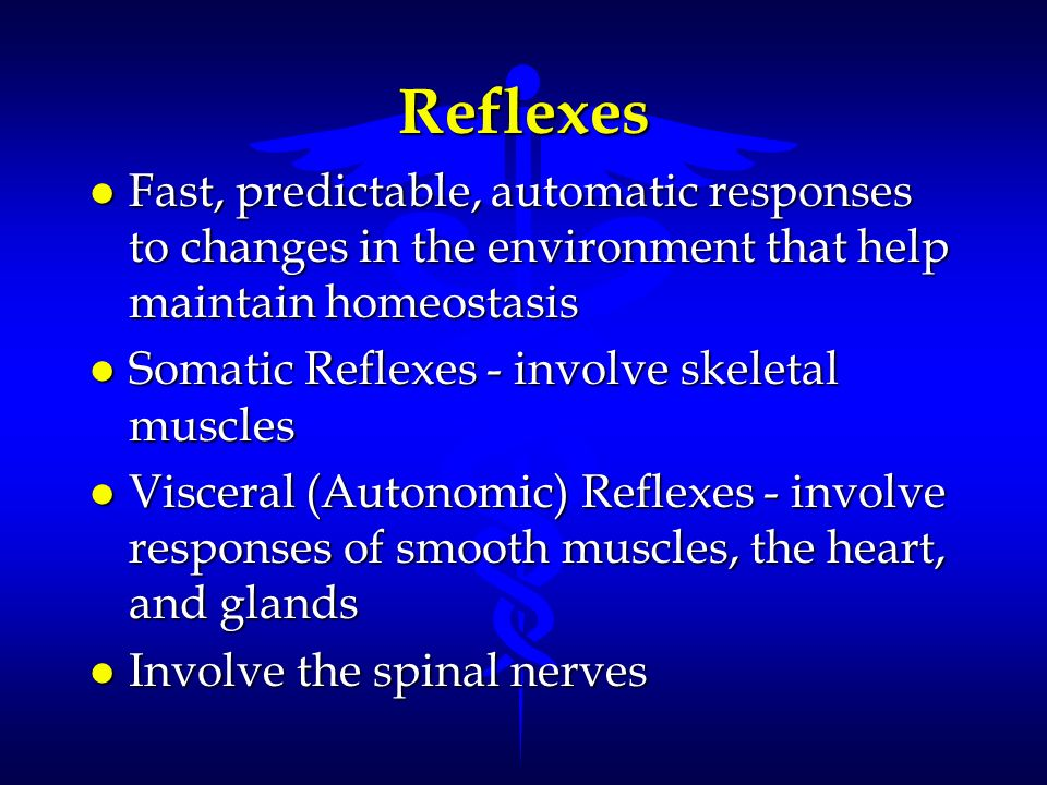 Reflexes Fast, predictable, automatic responses to changes in the environment that help maintain homeostasis.