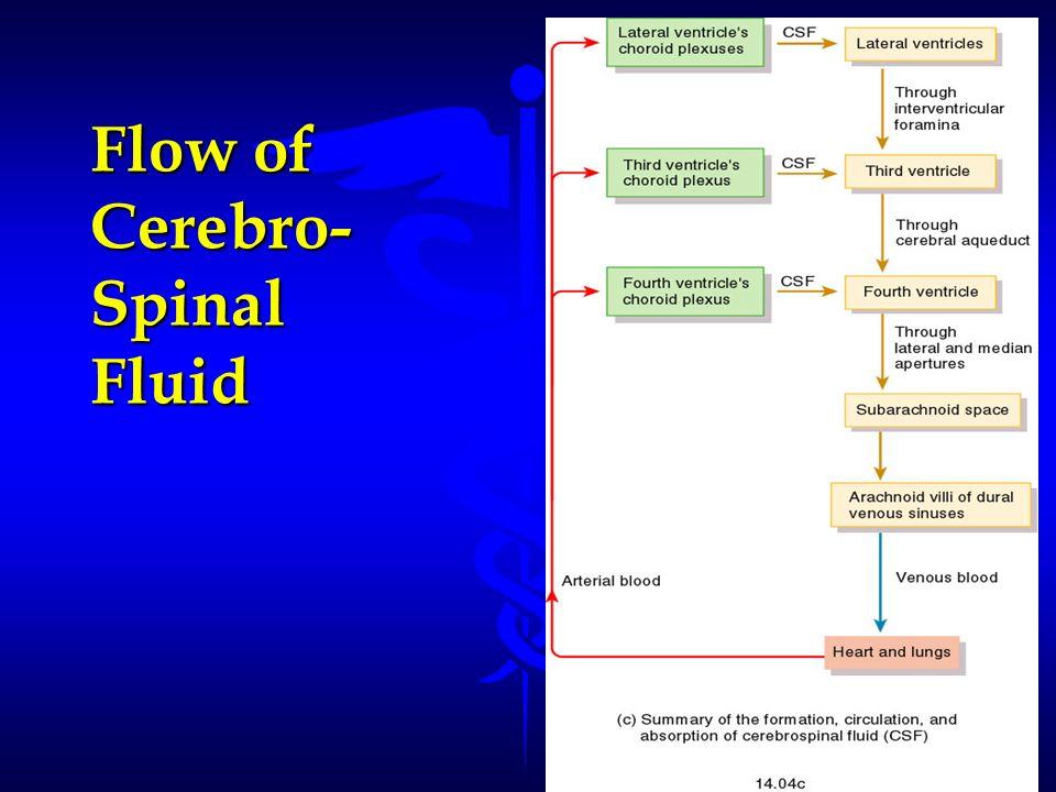 Flow of Cerebro- Spinal Fluid