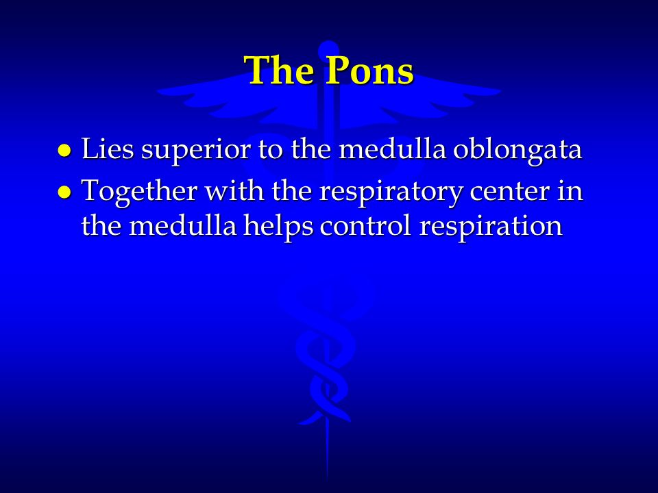 The Pons Lies superior to the medulla oblongata
