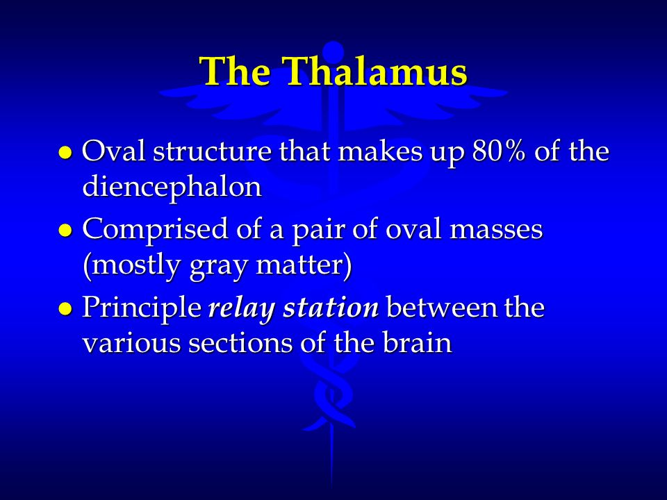 The Thalamus Oval structure that makes up 80% of the diencephalon