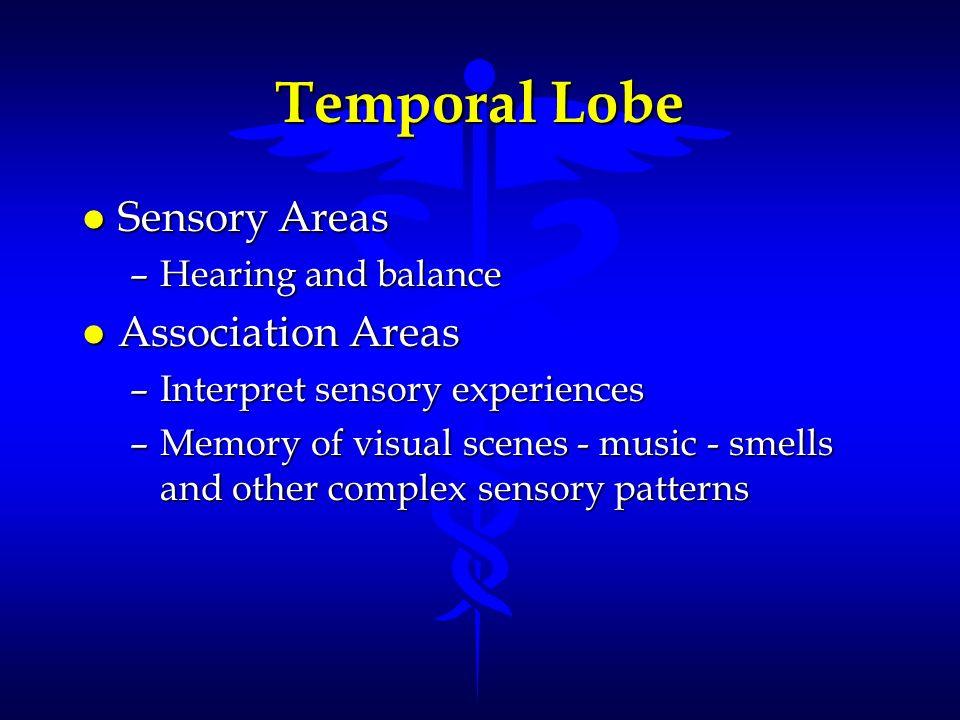 Temporal Lobe Sensory Areas Association Areas Hearing and balance