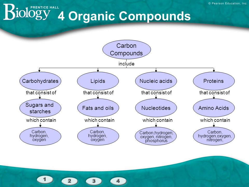 4 Organic Compounds Carbon Compounds Carbohydrates Lipids