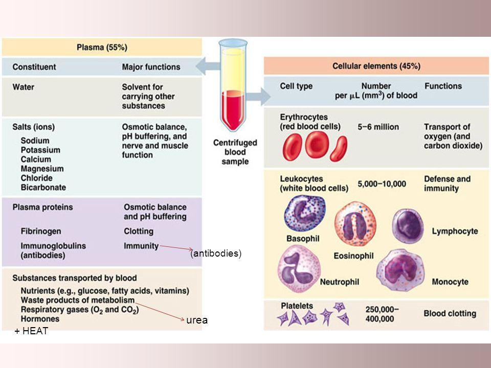 (antibodies) urea + HEAT