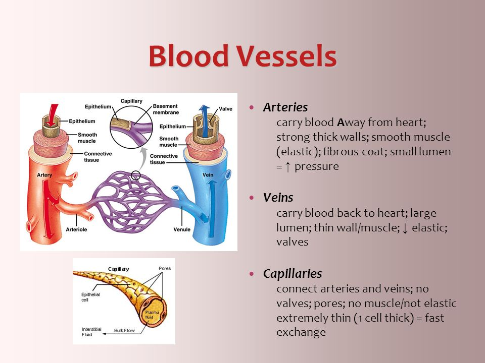 Blood Vessels Arteries Veins Capillaries