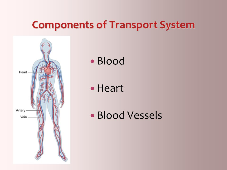 Components of Transport System
