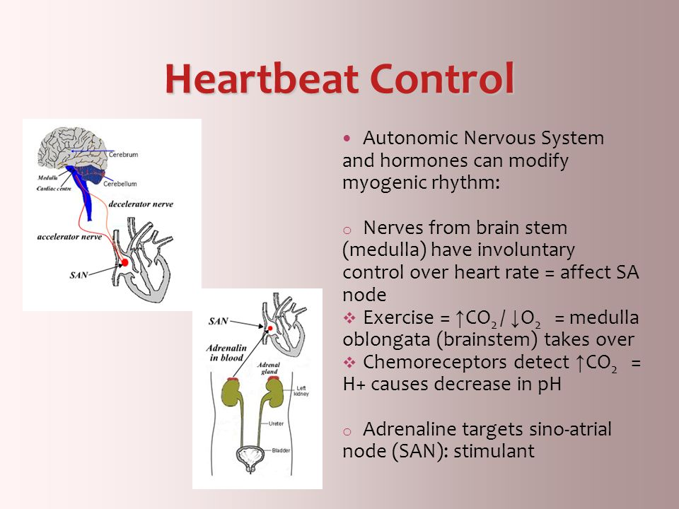Heartbeat Control Autonomic Nervous System and hormones can modify myogenic rhythm: