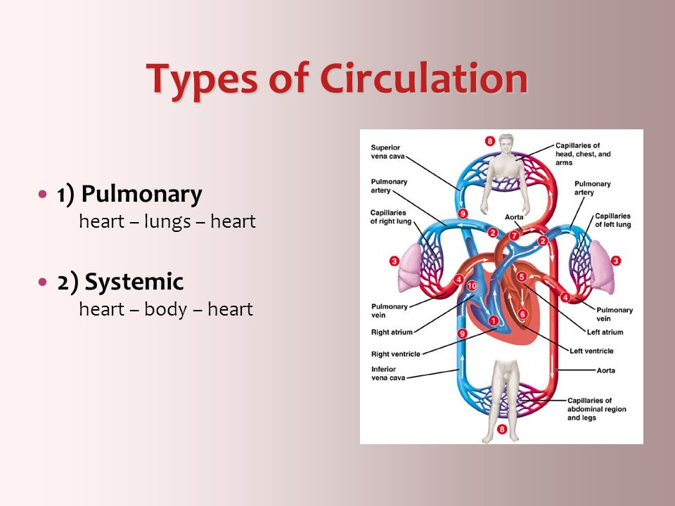 Types of Circulation 1) Pulmonary 2) Systemic heart – lungs – heart