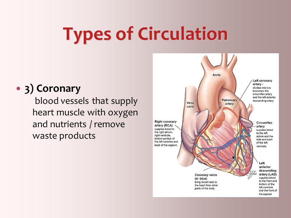 Types of Circulation 3) Coronary