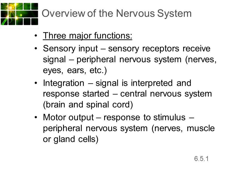 Topic Nerves Ppt Video Online Download