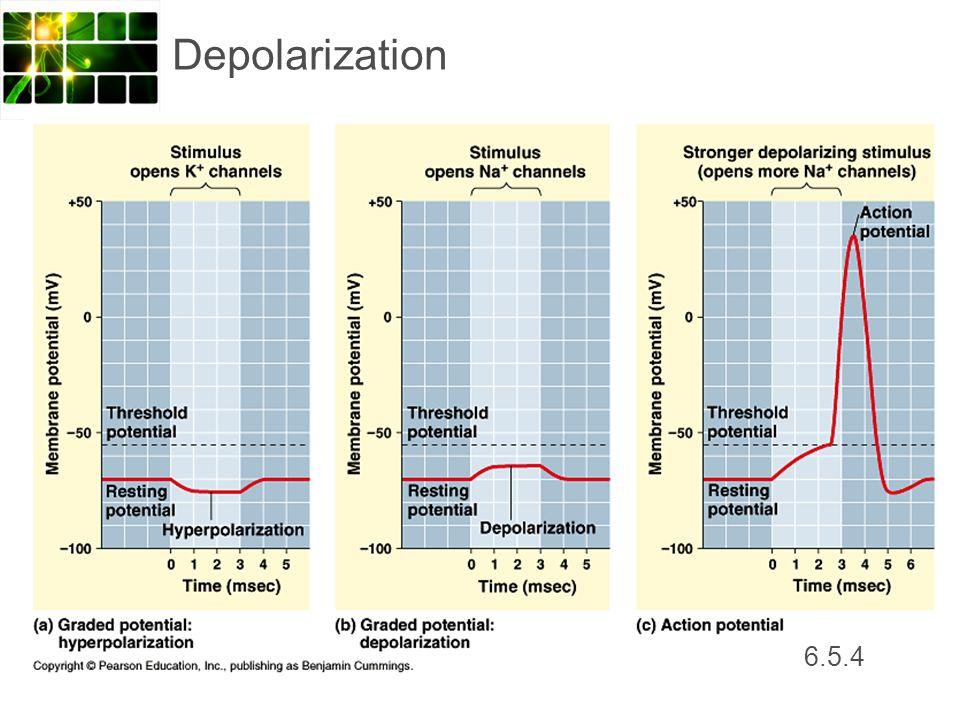 Depolarization 6.5.4