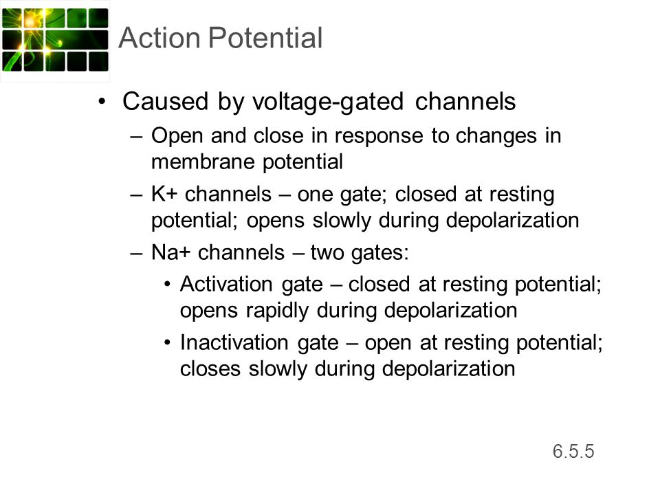 Action Potential Caused by voltage-gated channels