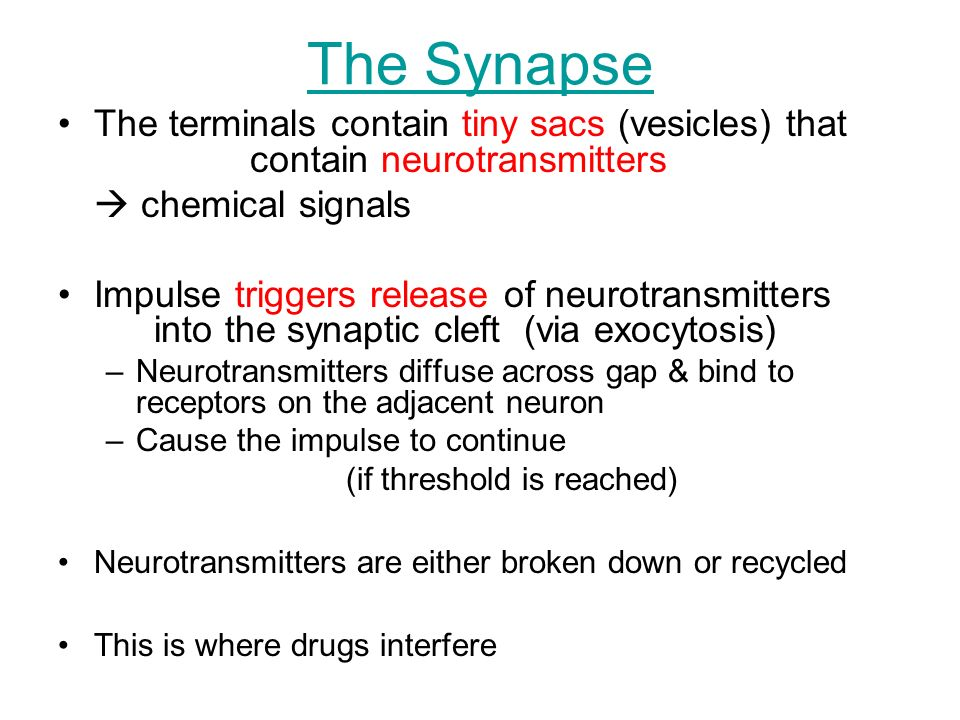 The Synapse The terminals contain tiny sacs (vesicles) that contain neurotransmitters.  chemical signals.