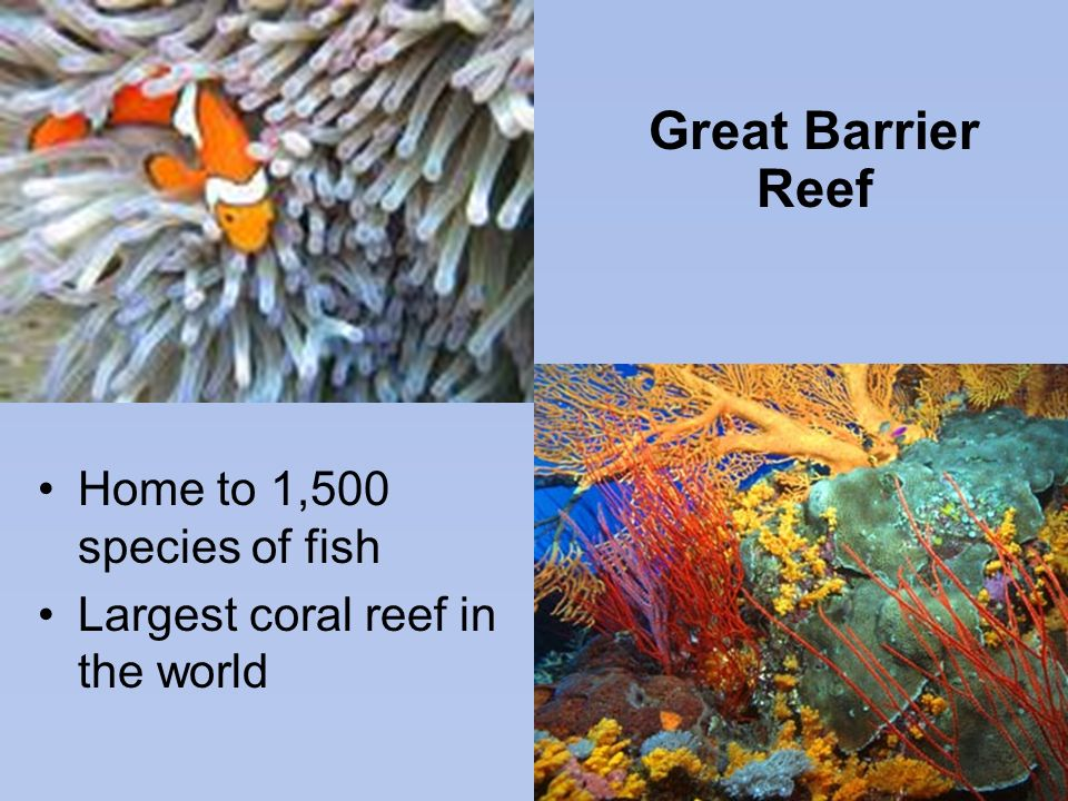 Great Barrier Reef Home to 1,500 species of fish