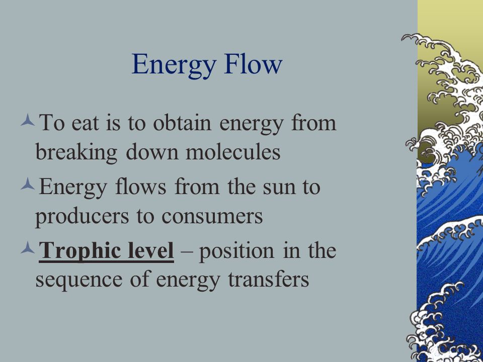 Energy Flow To eat is to obtain energy from breaking down molecules