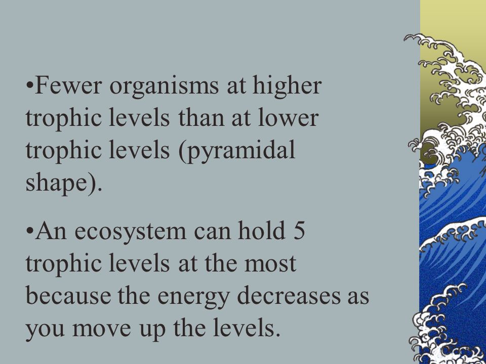 Fewer organisms at higher trophic levels than at lower trophic levels (pyramidal shape).