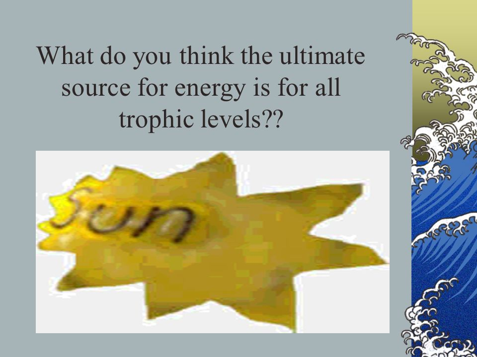What do you think the ultimate source for energy is for all trophic levels