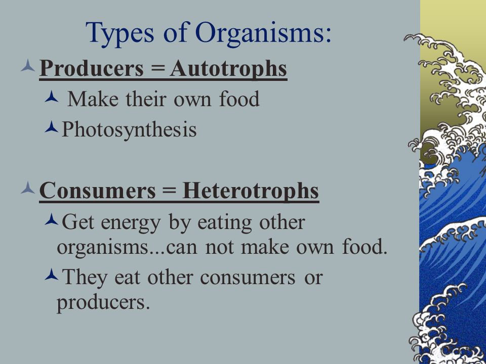 Types of Organisms: Producers = Autotrophs Consumers = Heterotrophs
