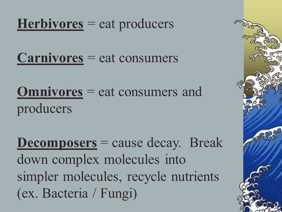 Herbivores = eat producers