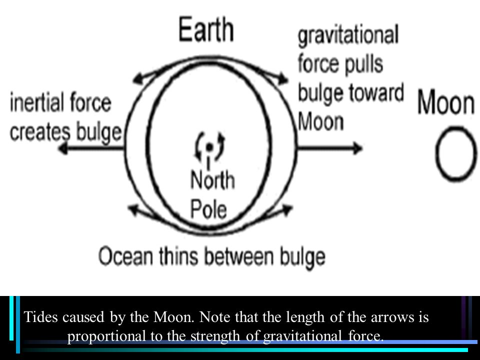 Tides caused by the Moon