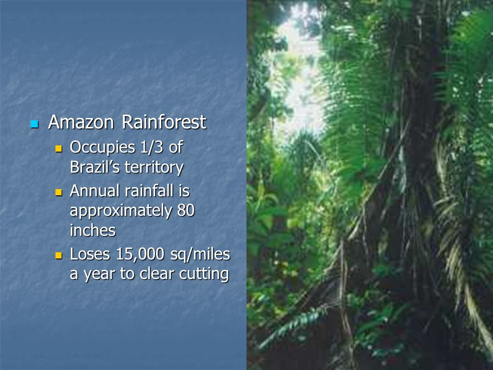 Amazon Rainforest Occupies 1/3 of Brazil's territory