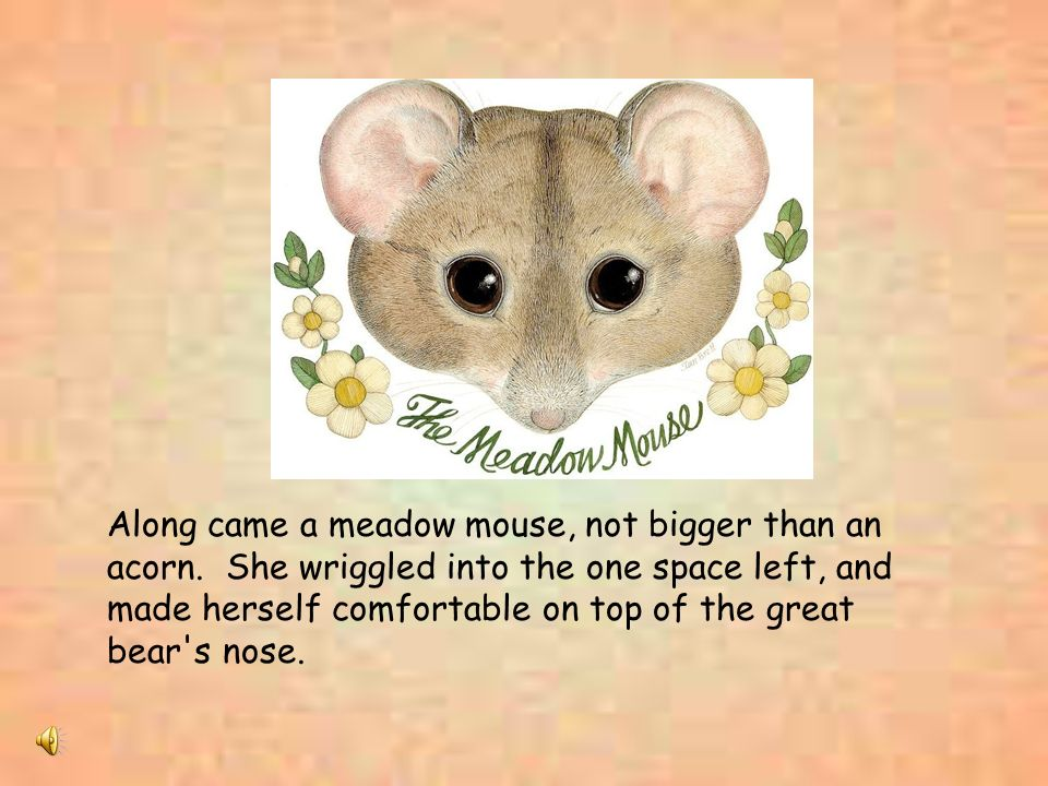 Along came a meadow mouse, not bigger than an acorn