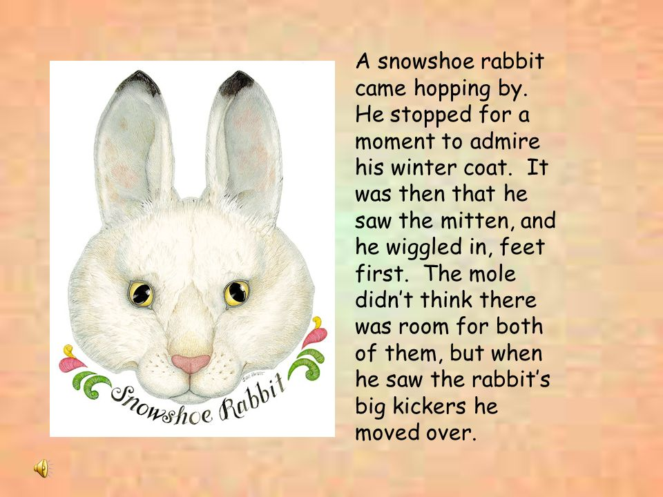A snowshoe rabbit came hopping by
