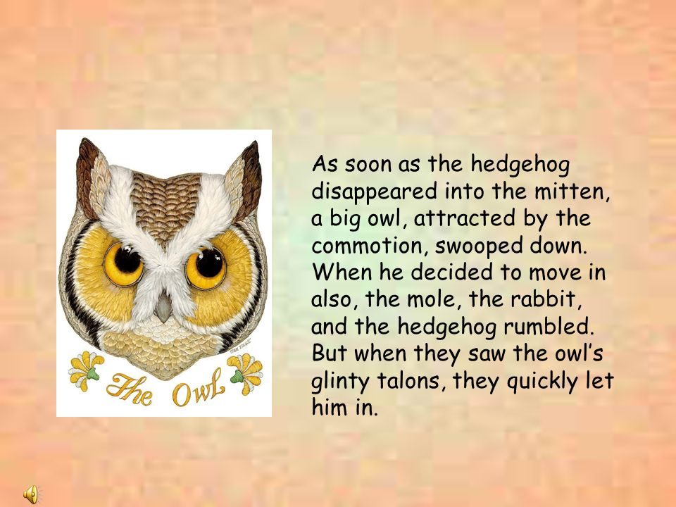 As soon as the hedgehog disappeared into the mitten, a big owl, attracted by the commotion, swooped down.