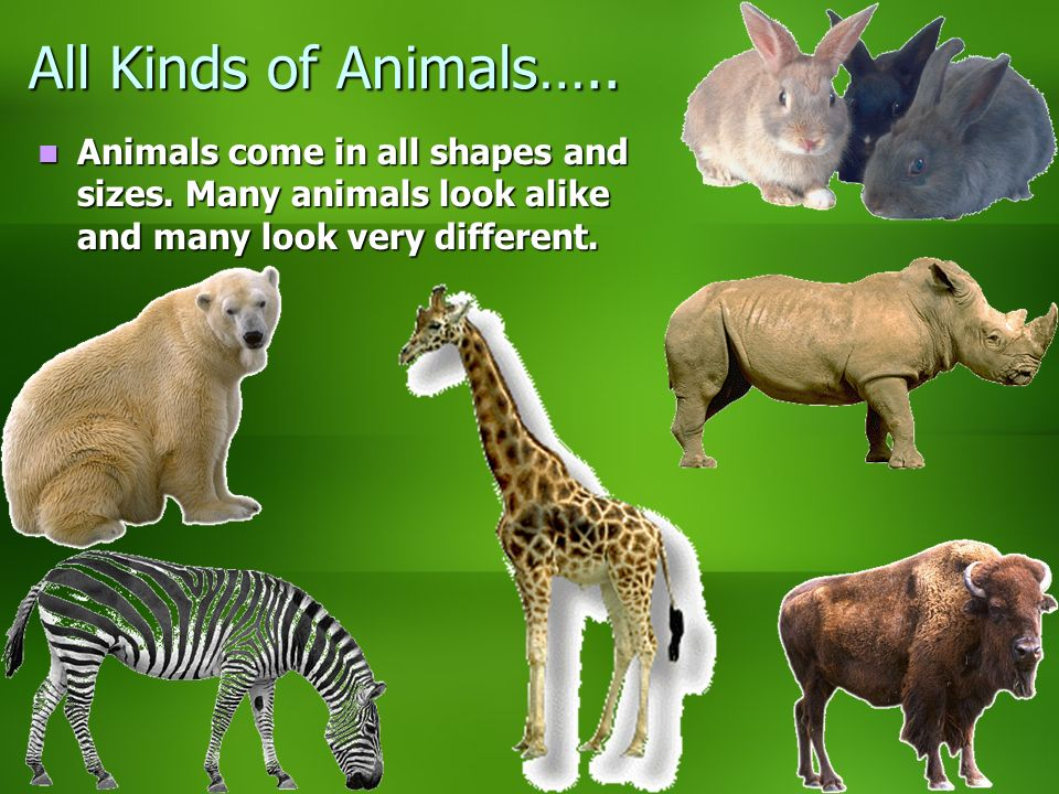 All Kinds of Animals….. Animals come in all shapes and sizes.