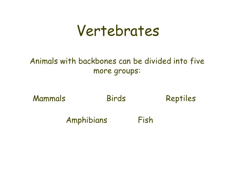 Animals with backbones can be divided into five more groups: