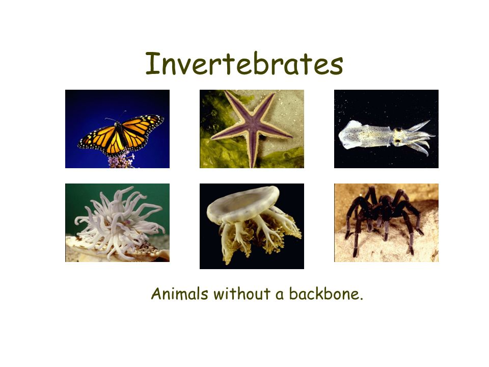Animals without a backbone.