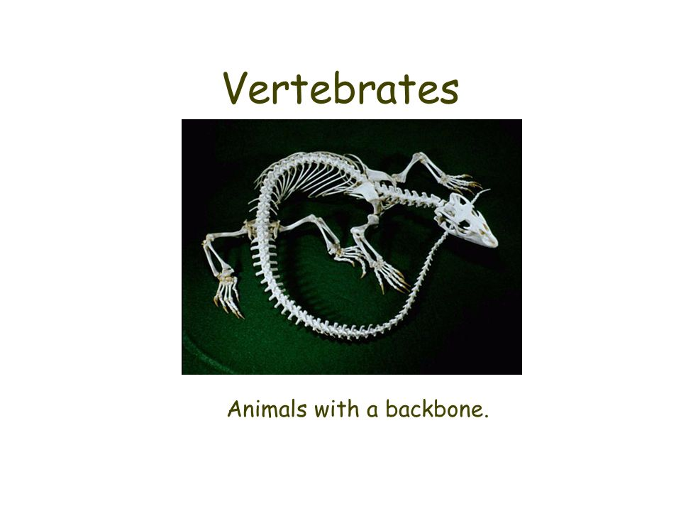 Animals with a backbone.