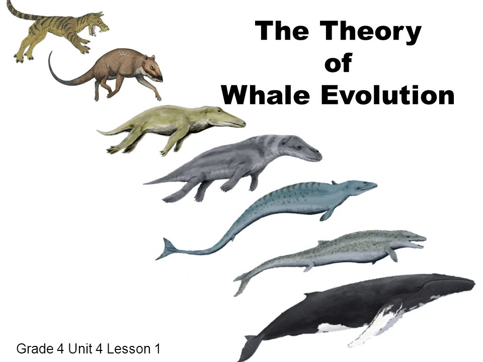 the definition of evolution and a look at scientists behind the theory of evolution
