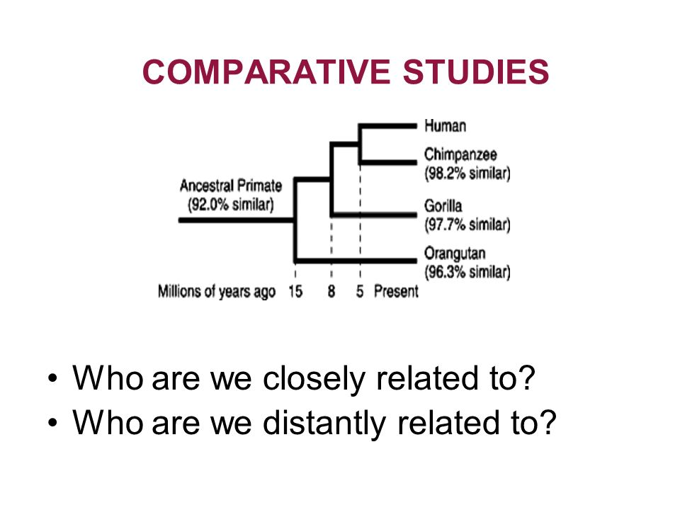 What are the principles of conducting a comparative study?
