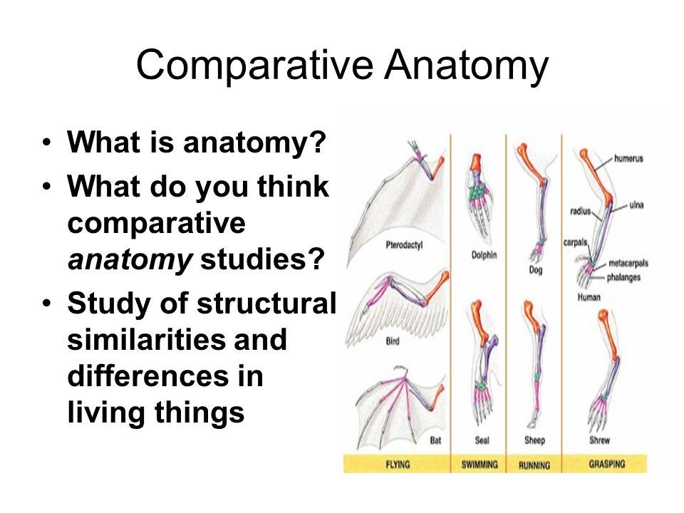 Fancy What Is Comparative Anatomy Embellishment - Anatomy Ideas ...