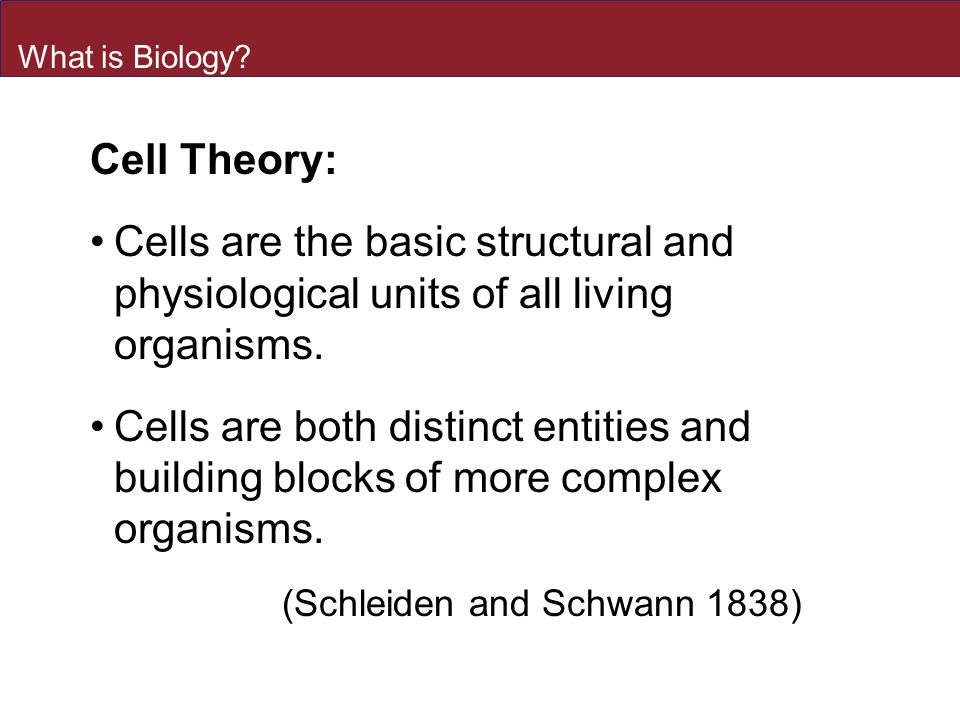 an analysis of the cell the fundamental structural unit of all living organisms Perhaps the most fundamental property of all living things is the ability to reproduce all organisms inherit the genetic information specifying their structure and function from their parents likewise, all cells arise from preexisting cells, so the genetic material must be replicated and passed from parent to progeny cell at each cell division.