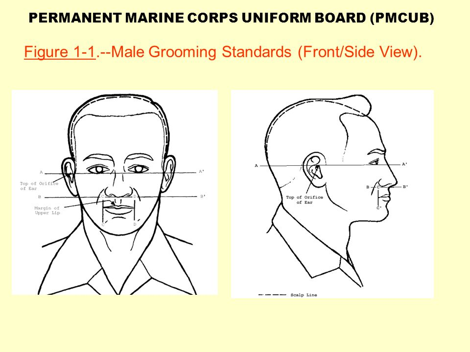 Figure Male Grooming Standards (Front/Side View). - ppt ...