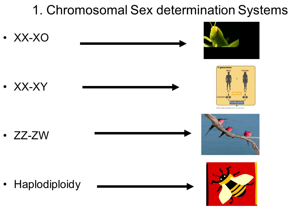 1. Chromosomal Sex determination Systems